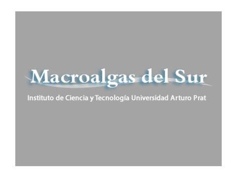 Macro Algas del Sur - WDesign - Diseño Web Puerto Varas